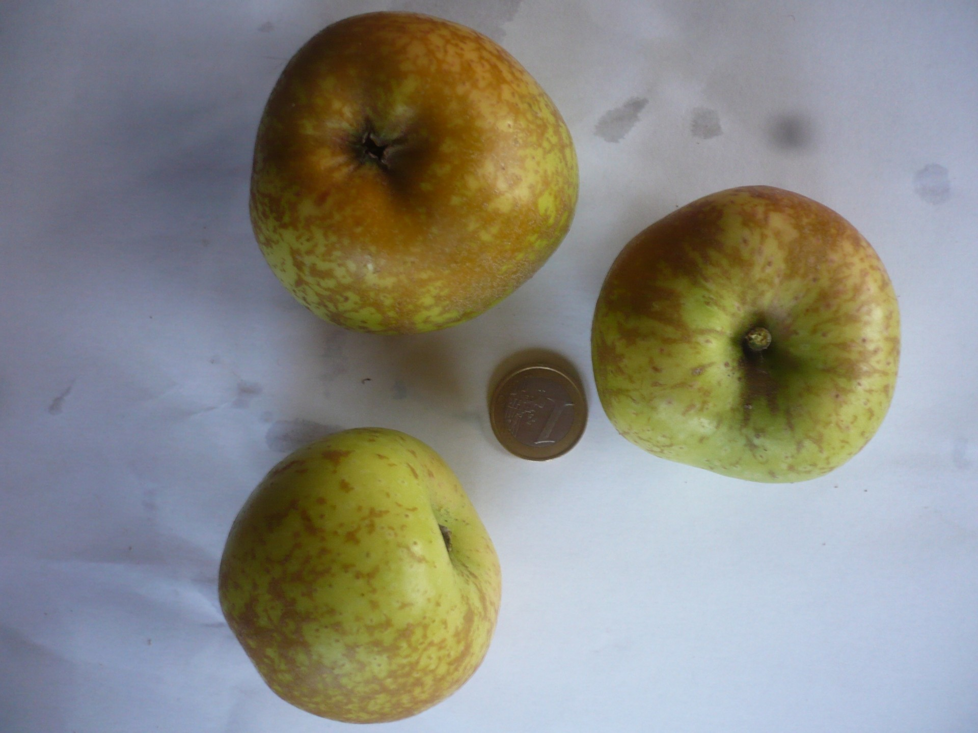 Reinette marbrée d'Auvergne